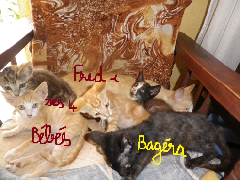 6 chats à insérer ma nomination sur Liebster Award