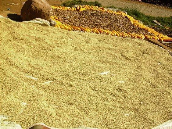 sechage de riz au soleil