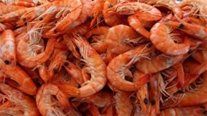 crevettes-bons-pour-les-reins