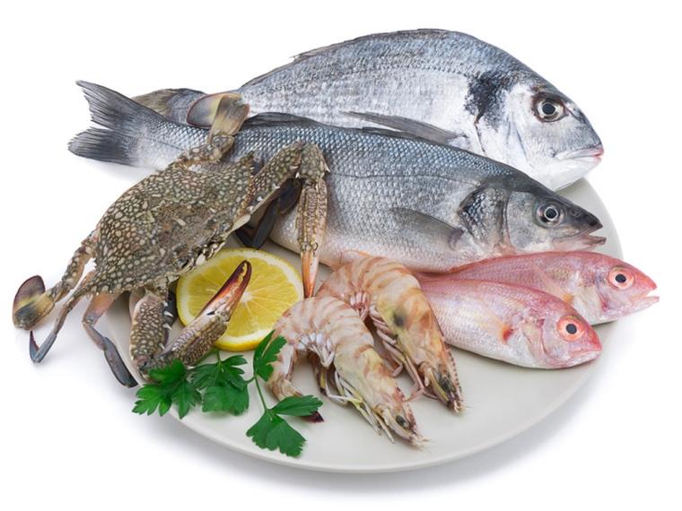 poissons sur 66 Millions d'Impatients