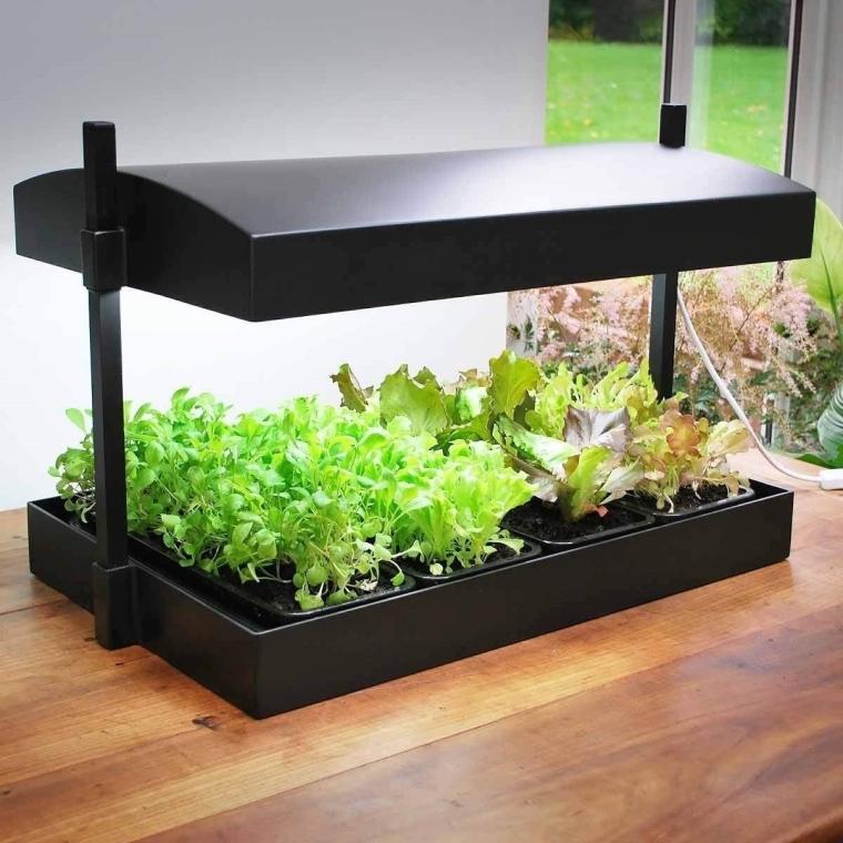 déco plantes d'intérieur sous serre