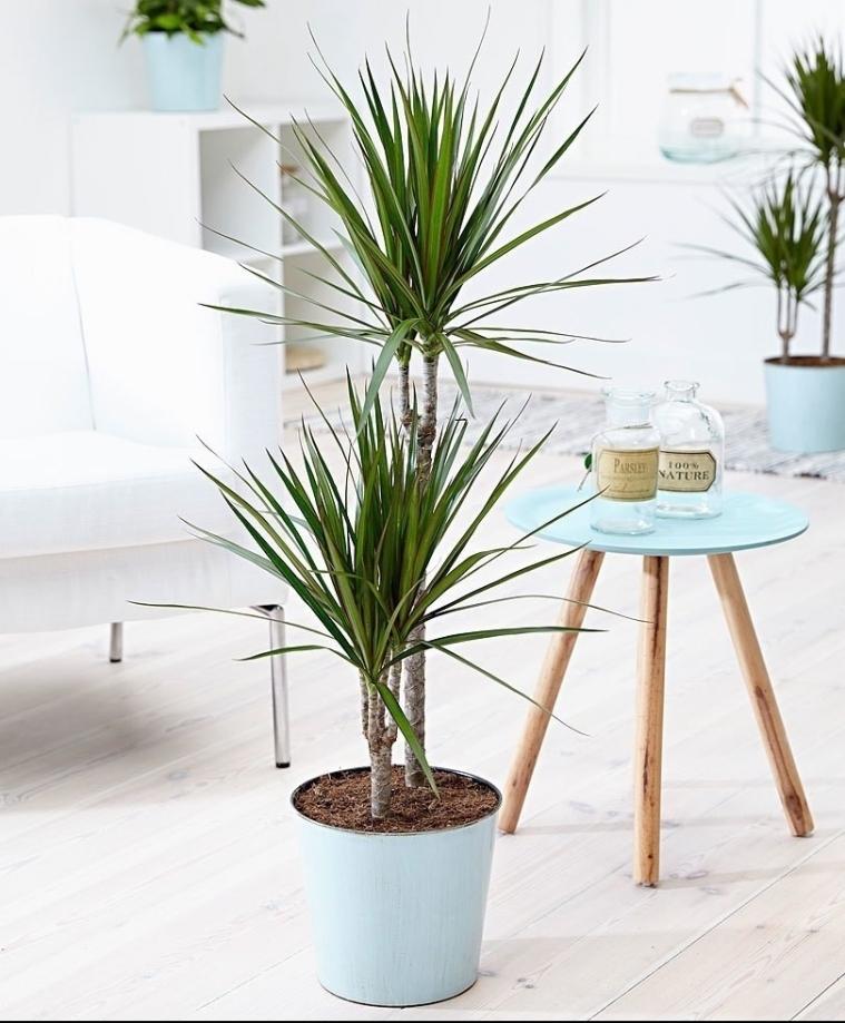 plantes d'intérieur bonne pour la santé