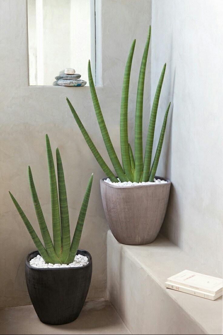 plantes vertes à vertus bien-être